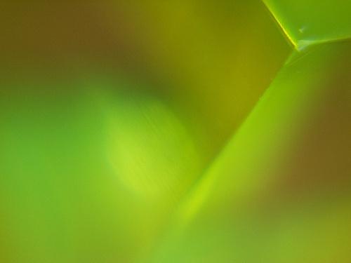 Serie Pruebas de macrofotografía