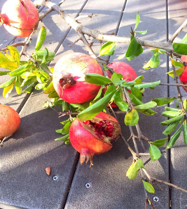 秋の実り #庭の恵み