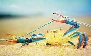 Image result for Colorful Sea Crabs