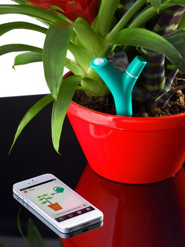 Parrot-flower power.                                    Soon you won't need a green thumb to keep houseplants happy. Just insert this battery-operated sensor into indoor soil to track light, humidity and temperature. Choose the type of potted plant you want to monitor from a library of 6,000 species via an app, and you'll be alerted when it needs more water, sun or fertilizer.