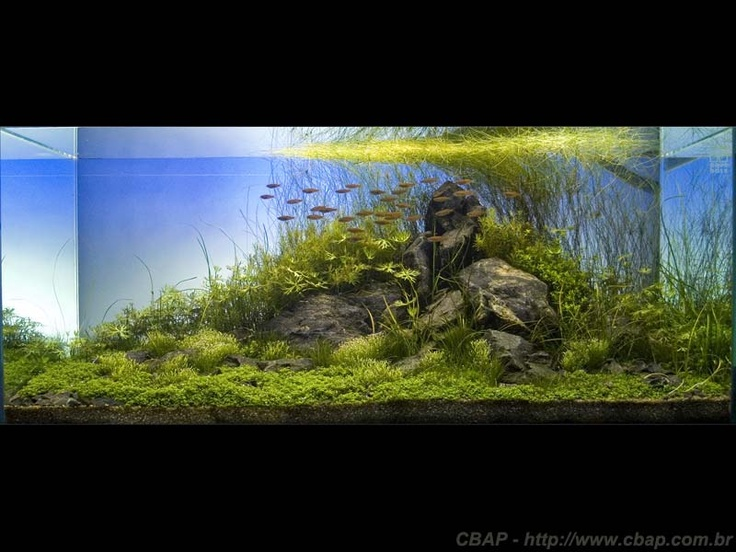 1000+ images about Dream Aquascapes on Pinterest