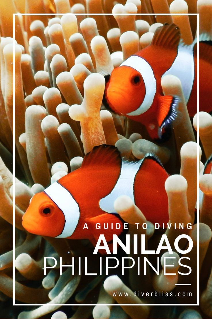 Scuba Diving Experience In Anilao Batangas Philippines Diver Bliss In 2020 Diving Scuba Diving Traveling By Yourself