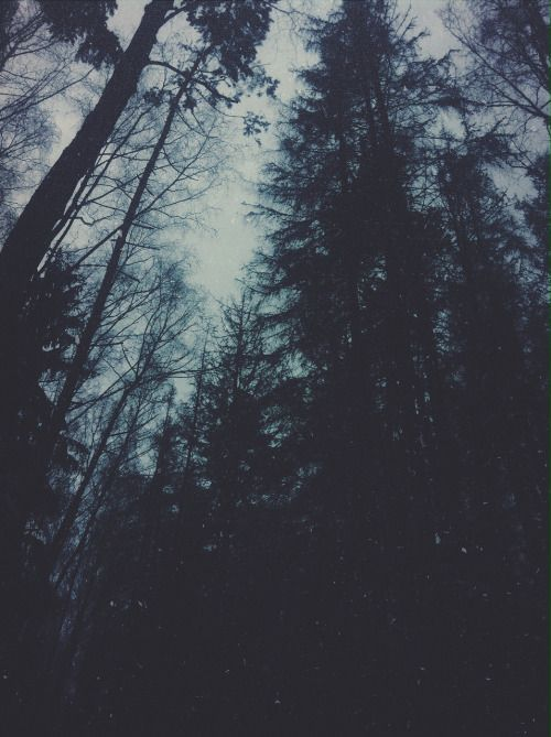 hipster tumblr photography  Buscar con Google …  Magic in the woods  Hipst…