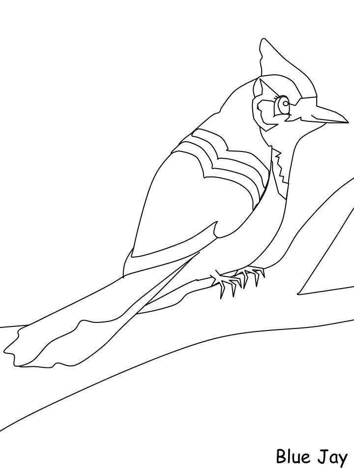 blue jay  coloring pages coloring pages for kids