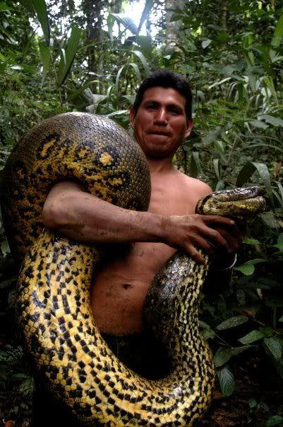 Amazon Forest Animals - Anaconda
