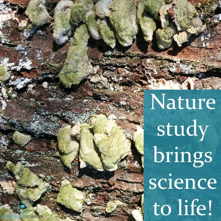 Nature study brings science to life!