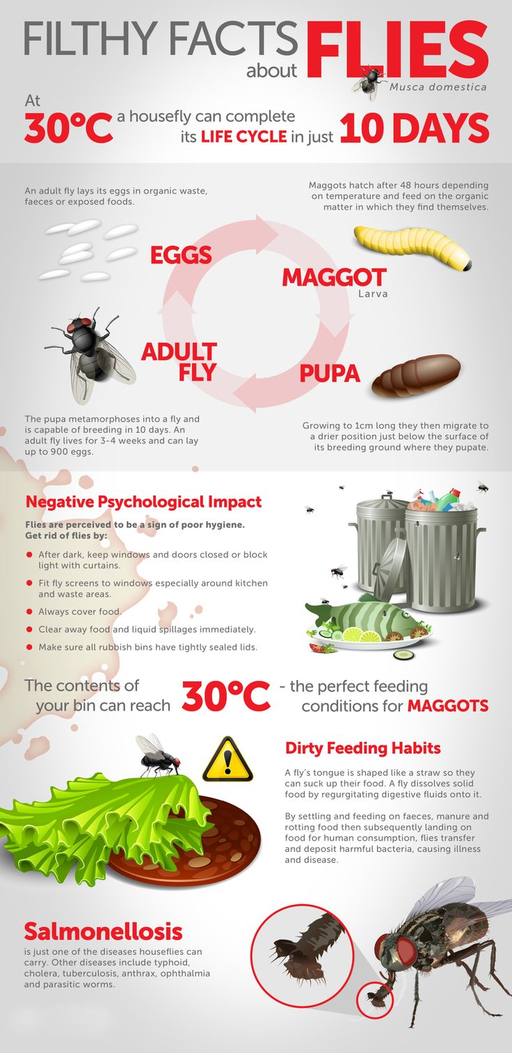 Filthy facts about #flies #aceexterminating