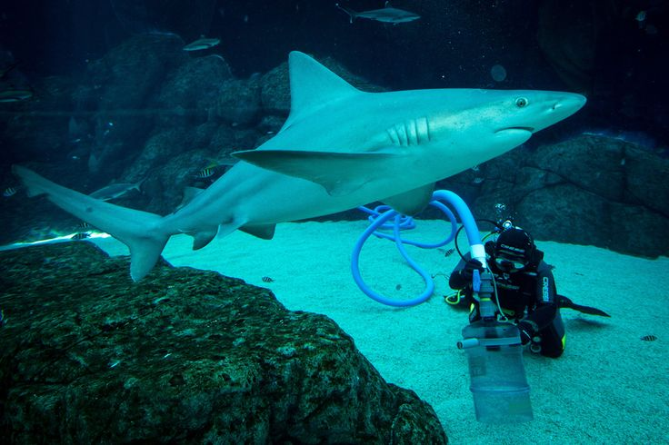 Vacuum with sharks. Marine Life Park in Singapore has over 100,000 sea animals