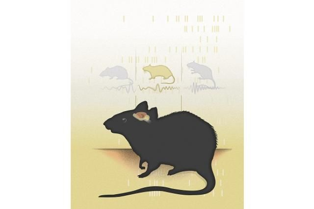 Neurons in the Brain Tune into Different Frequencies for Different Spatial Memory Tasks   neuroscientistnews.com