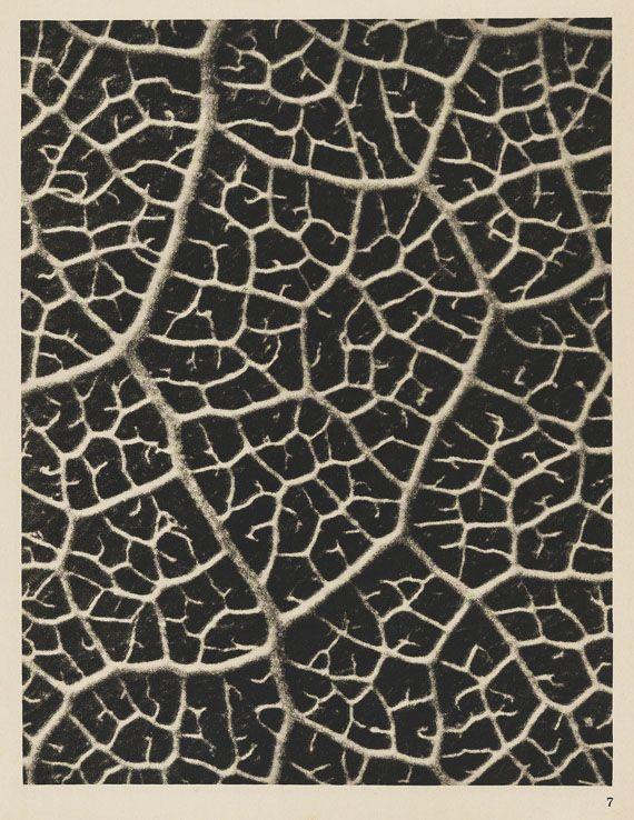 Karl Blossfeldt - Wundergarten der Natur. 1932.