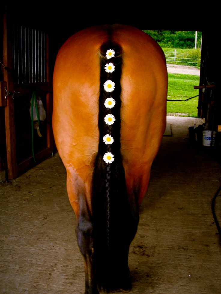 otteventer:  livinglifehowiwant:  I like my horse with big butts  wait but can s
