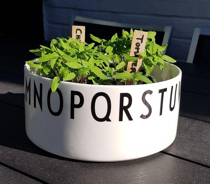 Det var en gang fire tomtskiver og litt jord, og vips ble det tomatplanter Midlertidig plassering i skål fra Design Letters av Arne Jacobsen.