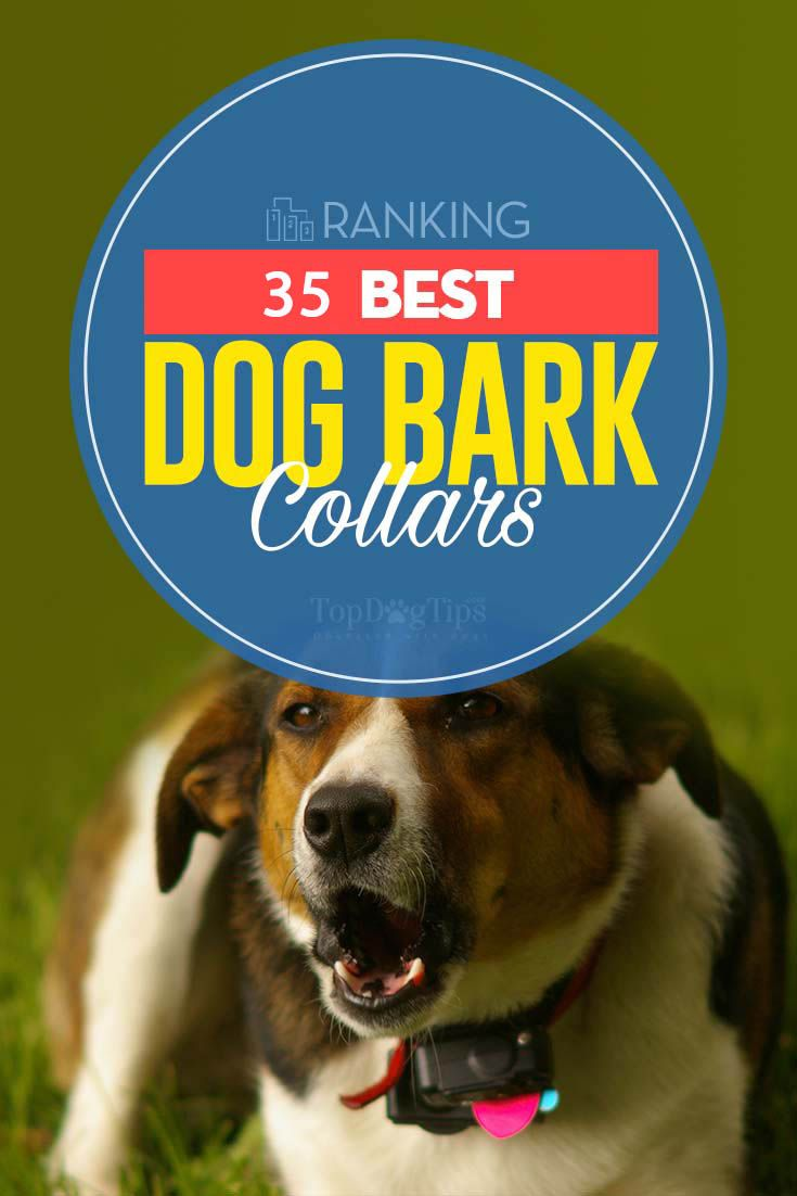Top 35 Best Bark Collars For Dogs Bark Collars For Dogs Dogs