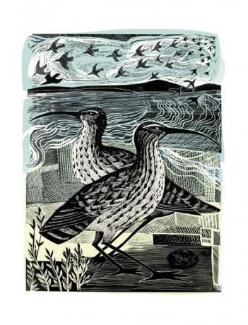 'Two Curlews' by Angela Harding (linocut and silkscreen)