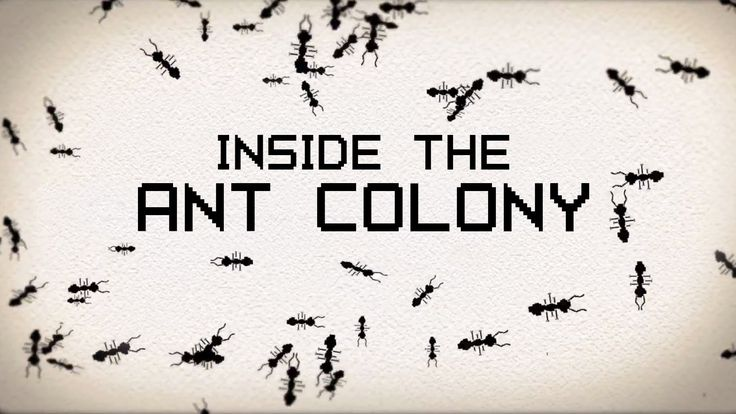 Watch when reading Two Bad Ants.  Inside the ant colony - Deborah M. Gordon