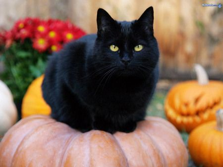 Spooky the Cat sitting on a pumpkin. Adorable.