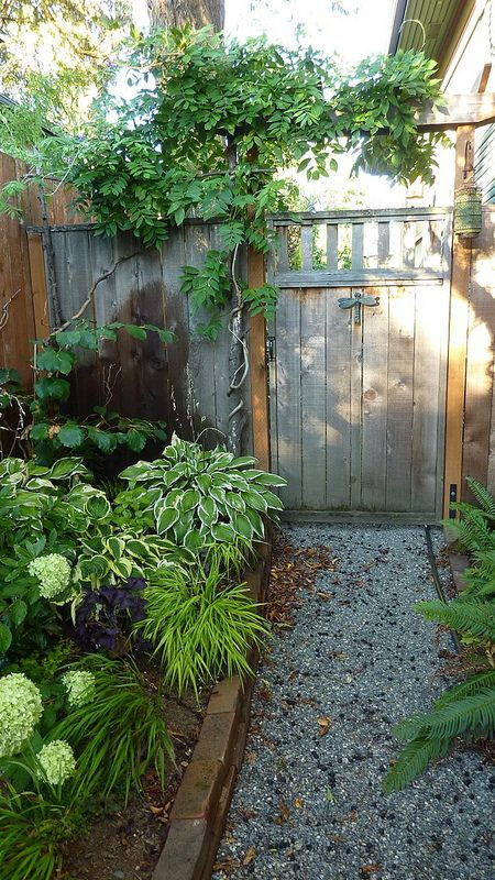 Portland Oregon Garden | Shaded Garden Gate with Gravel Path, and American Wisteria.