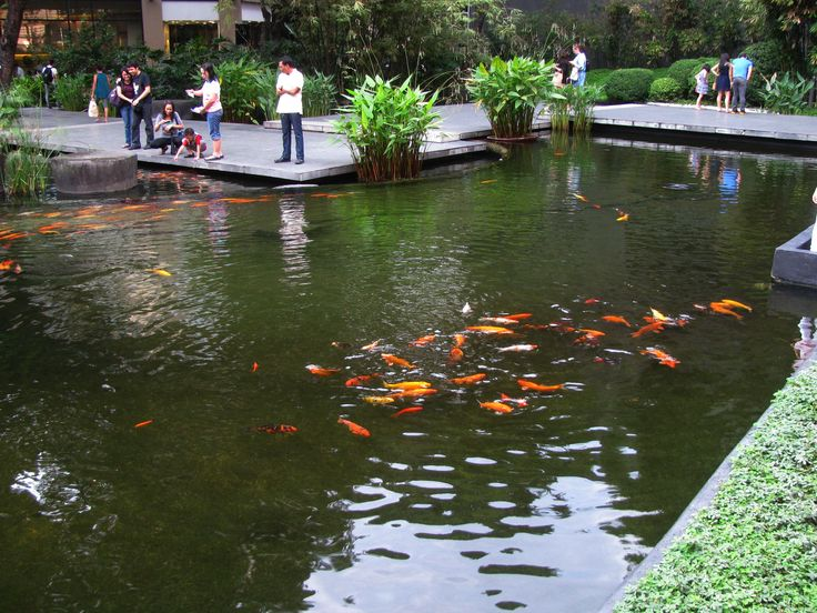 106 Best Images About Koi Ponds On Pinterest The Pond