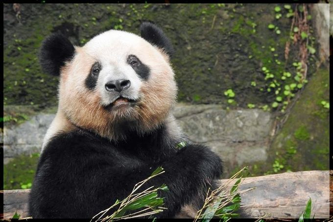 smile by Sherrilynn - ViewBug.com