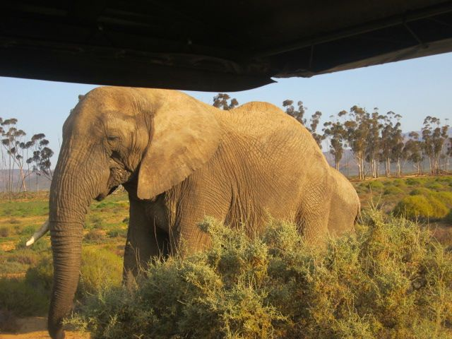 What a view @inverdoorn. #Elephant #CapeTown