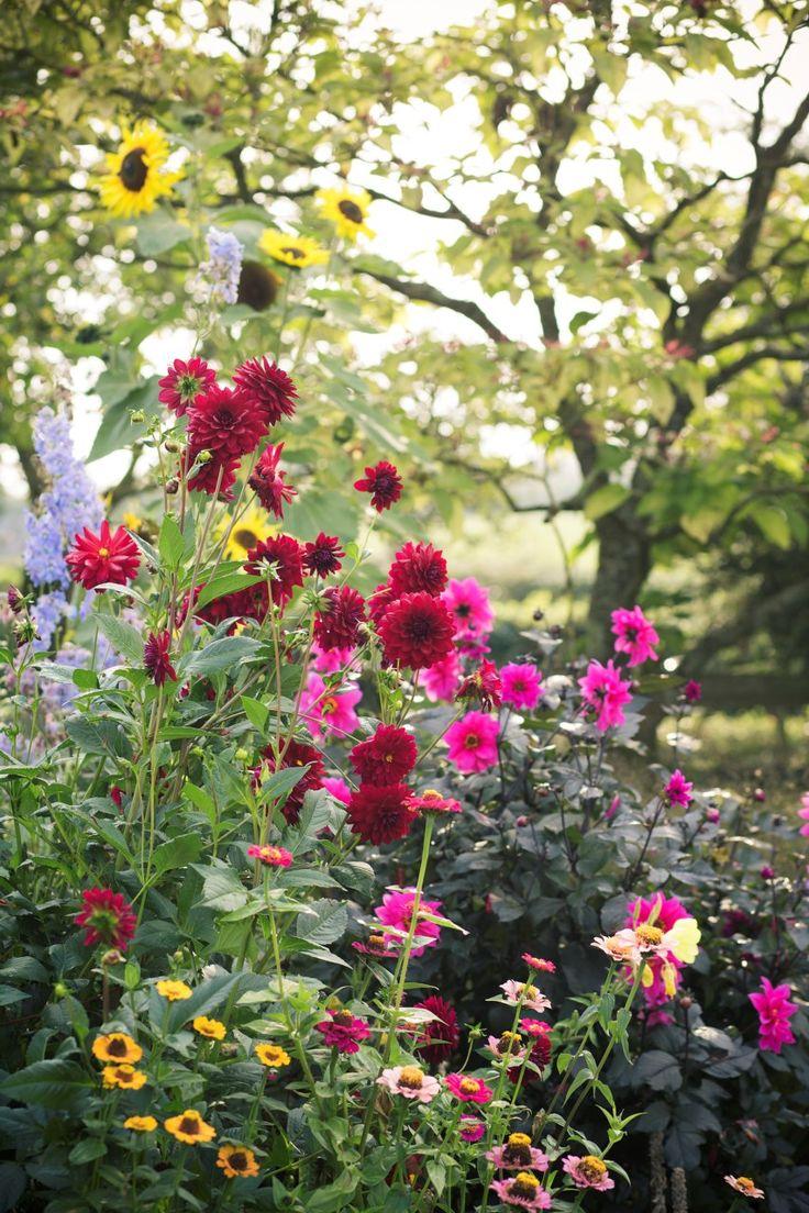 Oltre 25 fantastiche idee su fiori verdi su pinterest for Famose planimetrie delle case
