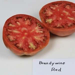 Heirloom Tomato エアルームトマト   http://berryslife.com