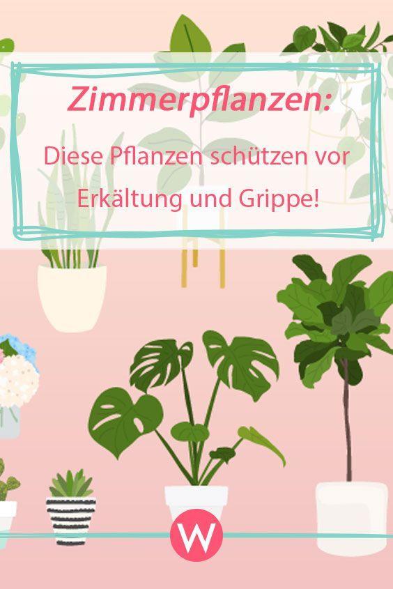 Stelle diese Pflanzen in deine Wohnung und schütze dich so vor Erkältungen und Grippe! #gesundheit #gesund #pflanzenfreude