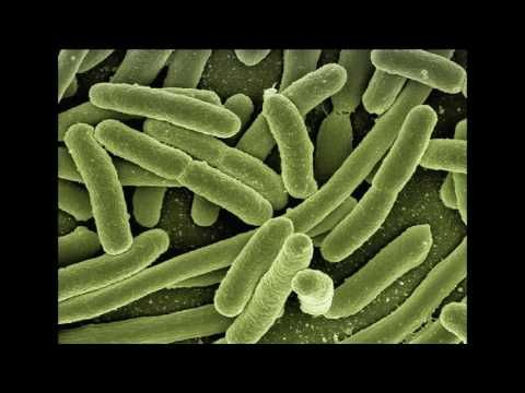 PATHOGENS - osha bloodborne pathogen training     PATHOGENS - what are pathogens?       there...