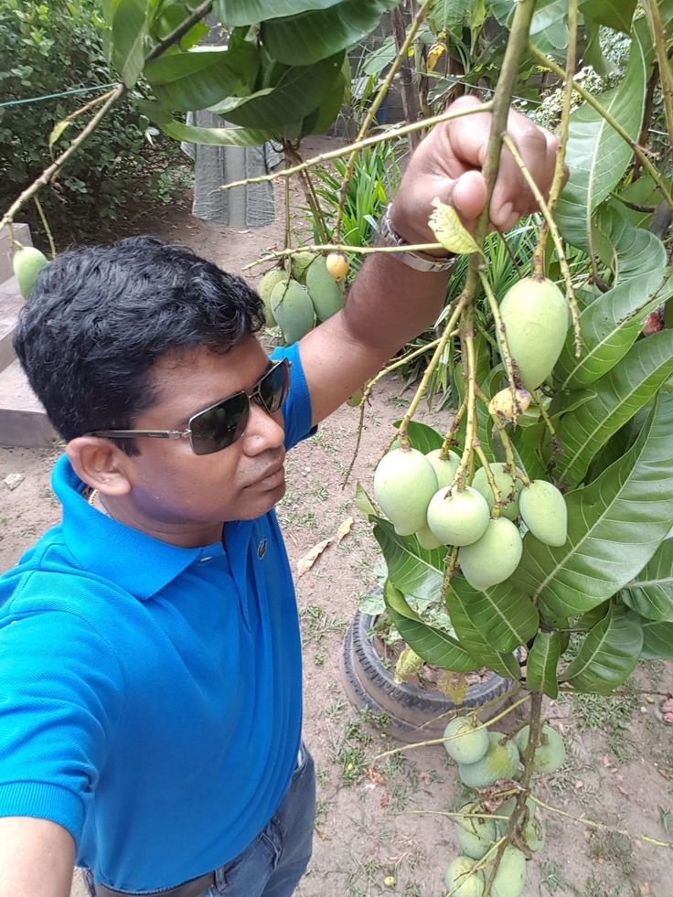 #Mango Tree #travelwithleo