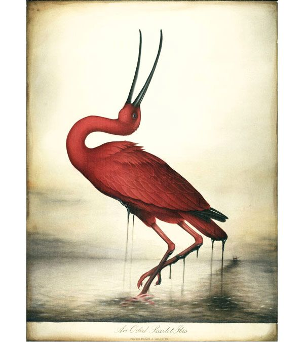 best the scarlet ibis by james hurst images  an oiled scarlet ibis lindsey carr