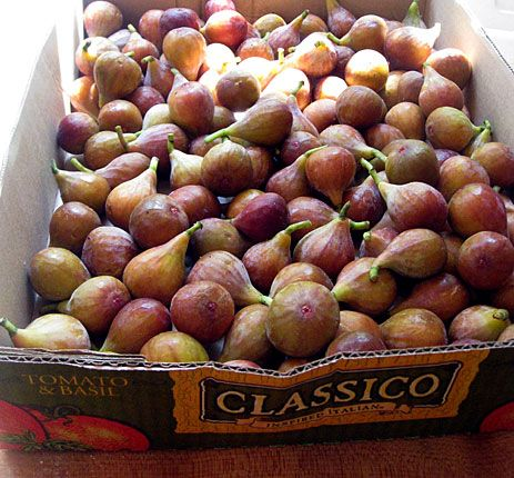Fresh fig recipes; I made these fig preserves this past summer, and they were amazing. I would recommend removing the lemon and ginger before adding them to the jars, but that is just personal preference. Be sure to sterilize jars beforehand as you are not processing the jars with the figs in them after you can them. Will cheerfully make again!