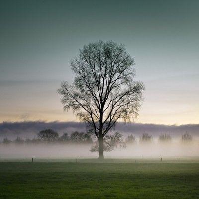 ~ arbre dans la brume ~ #fog #serenity #zen #tree #arbre