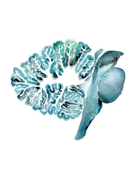 El cerebelo y el tronco cerebral en turquesa cerebro por LyonRoad