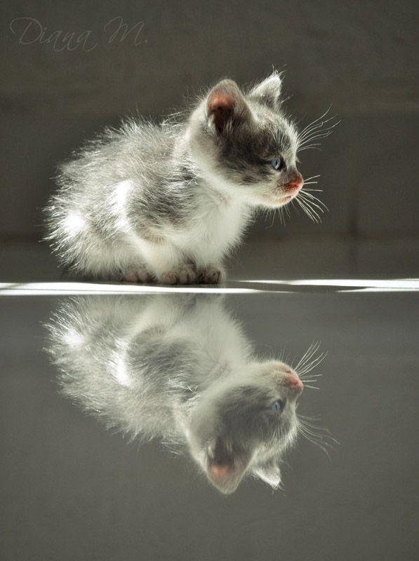 Kitty reflection...