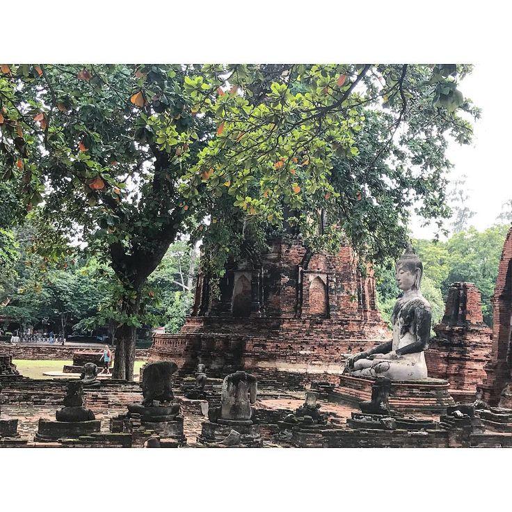 🌳 Visite du temple Wat  mahathat . #bouddha  #gare #station #thailand #temple #ruine #roadtrip #road #sacados #north #trek #trekking #elephant #monkey #entrefilles #copines #adeuxcestmieux #besoinderien #folie #travel #voyage #plaines #avions #folie #ruines