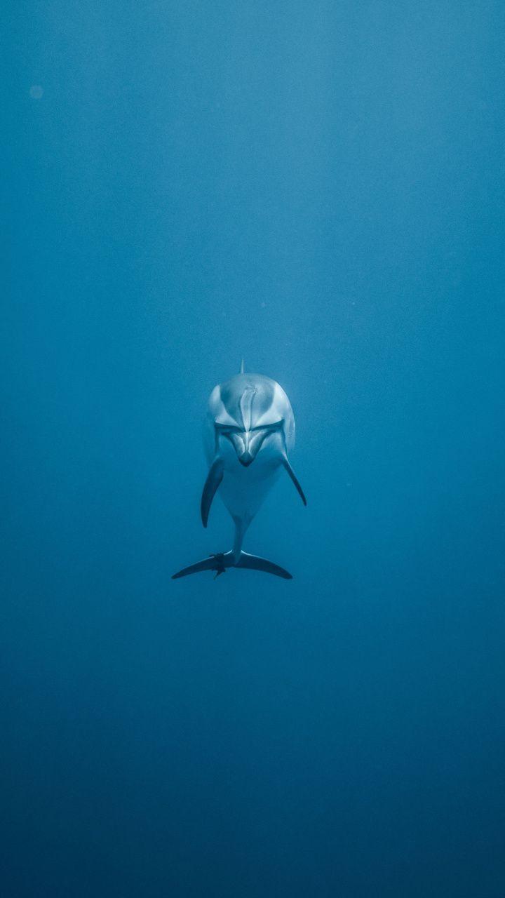Dolphin Fish Minimal Underwater 720x1280 Wallpaper Underwater Animal Wallpaper Wallpaper