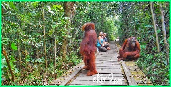 Hewan Langka Di Indonesia Cara Pelestarian Dan Suaka Margasatwanya Dunia Fauna Hewan Binatang Tumbuhan Hewan Langka Hewan Suaka