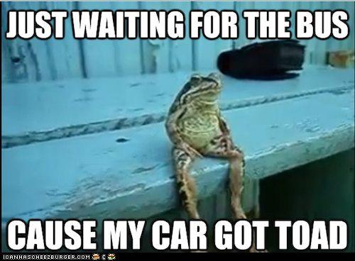 : Car, Bus, Toad, Funny Stuff, Funnies, Humor, Animal
