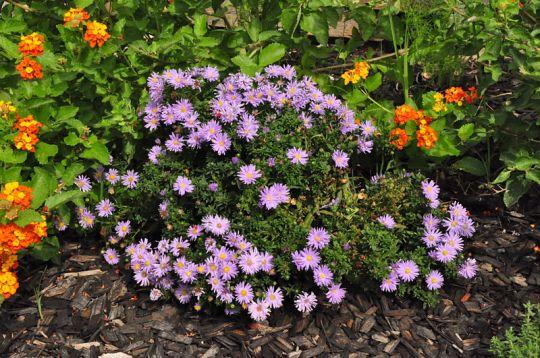 75 best Landscaping Ideas images on Pinterest   Backyard ideas Decks and Backyard patio