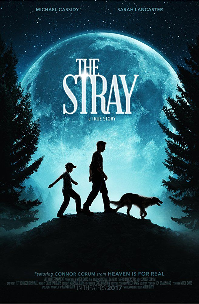 Watch Full Movie The Stray - Free Download HD Version, Free Streaming, Watch Full Movie