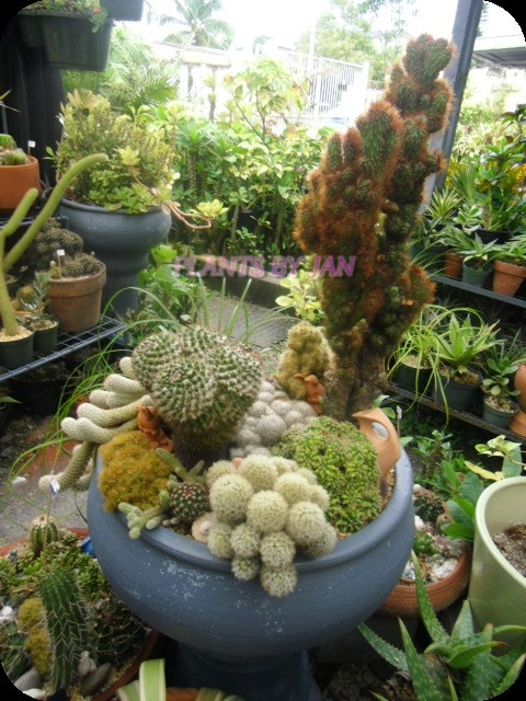 Awesome Cactus Garden