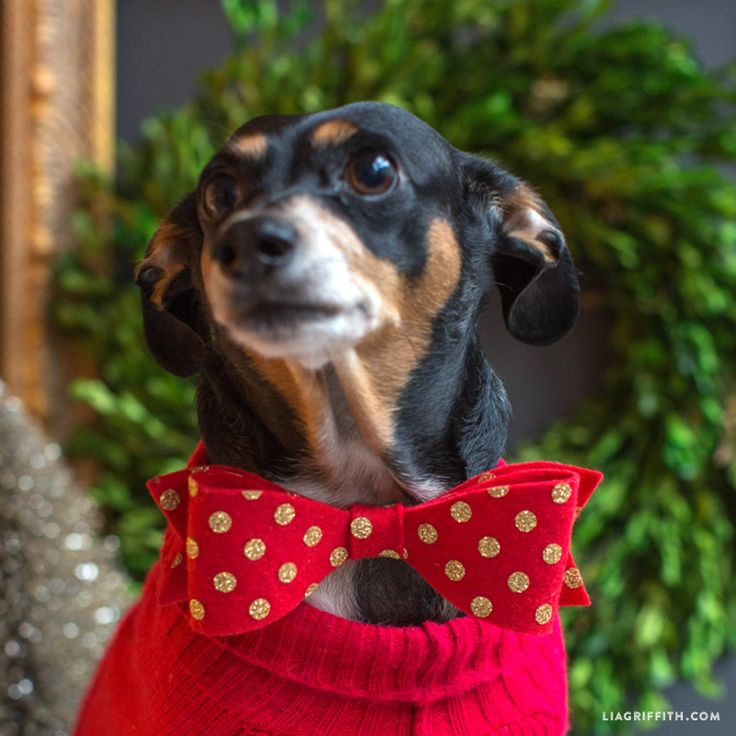 DIY Bow Tie For Your Pet