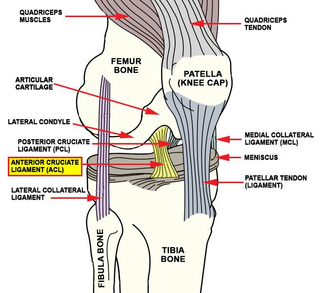 sports injuries posterior cruciate ligament tear essay Knee ligament sprains or tears are a common sports injury they cross each other to form an x with the anterior cruciate ligament in front and the posterior cruciate ligament in back more than one operation may be required when treating multiple ligament injuries.