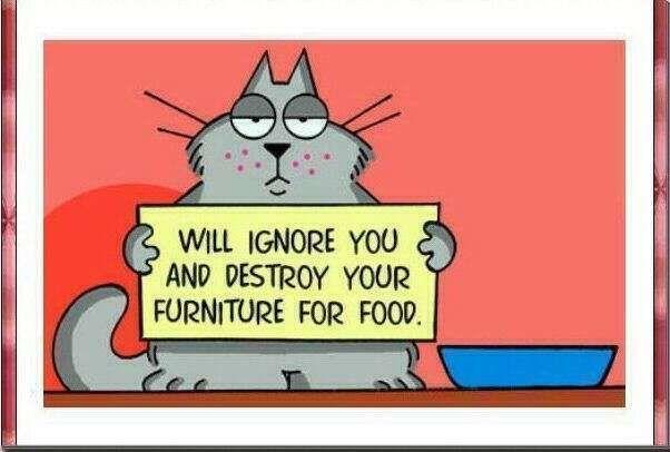 A Cat's Mission Statement