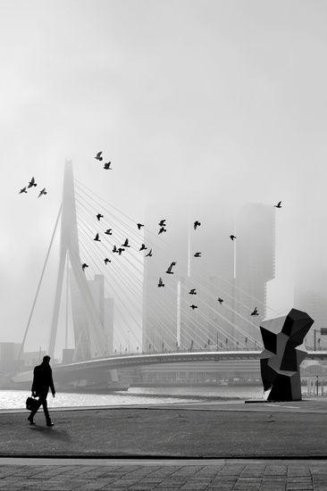 Misty Morning - Erasmusbrug in mist auf Leinwand, als Poster oder Kunstdruck
