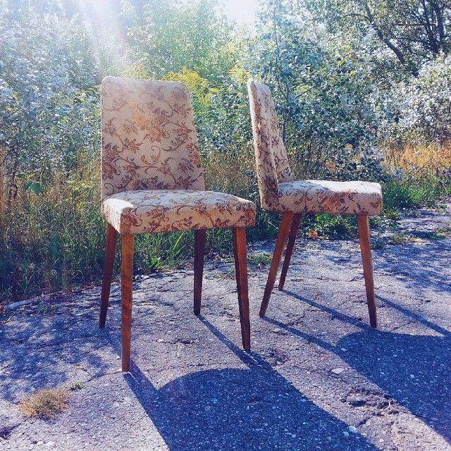 Beautiful midcentury chairs in the september sun Muszelki we wrześniowym słońcu #vintage #furniture #interiors #industrial #design #loft #retro #vintageshop #sklepvintage #poznan #midcenturymodern #midcentury #vintagestyle #60s #lata60te #60er #chair #krzesło #stuhl #old #chaise #silla #stoel #60jahre #wnętrza  #vscocam #interiors #interiorstyling #interiordesign