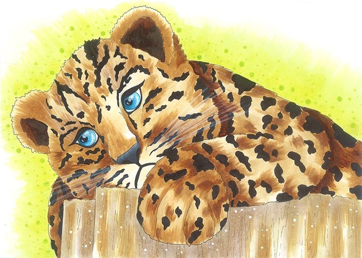 Leopard | drawn by Anastasia Opachanova