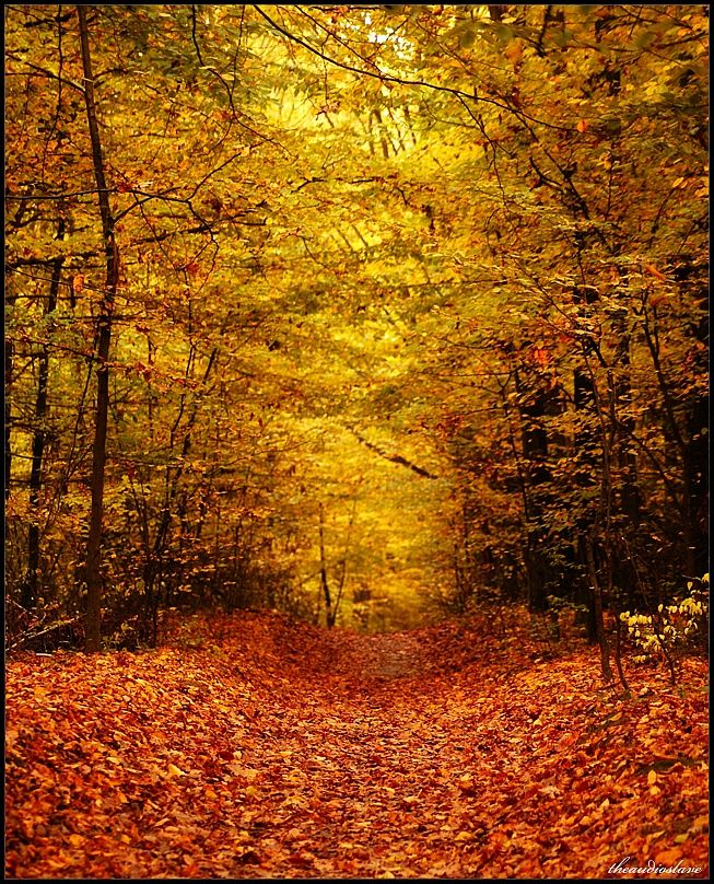 Orange King - Zemborzycki forest,  Lublin, Poland.