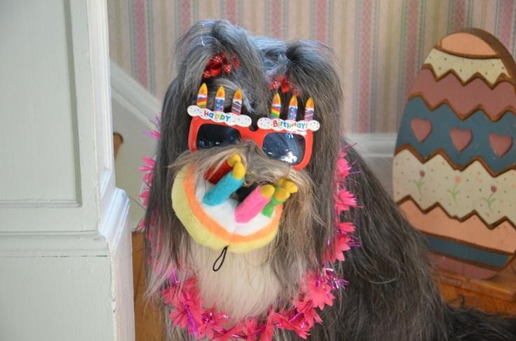 Beardie Birthday!: Beardy Birthday