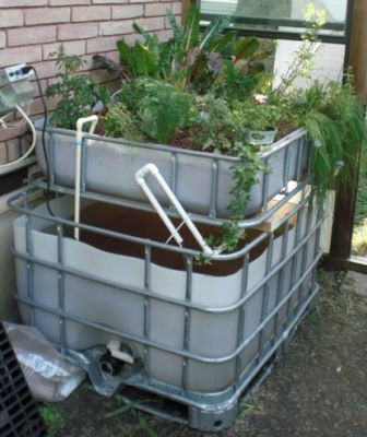 17 Best Images About Fish Farming Aquaponics On Pinterest